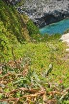 Vegetatie luxurianta Porto Roxa