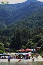Padure pini plaja Paradise Thassos