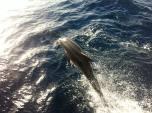 Croaziera Skiathos - Delfiniiii!!!