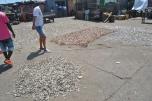 James Town: Diferite specii de pesti la uscat