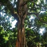 Benin - Padurea sacra