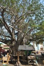 Benin - Mic bazar in fata Templului pitonilor