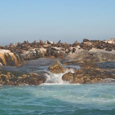 Duiker Island- Seals Island