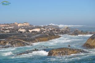 Duiker Island-Seals Island