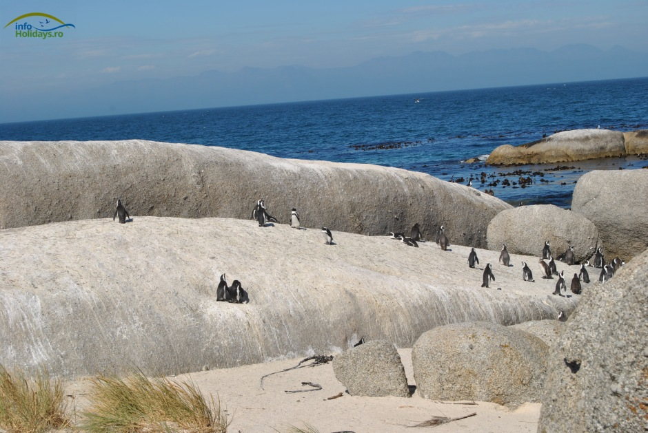 Boulder Beach -Penguin Colony
