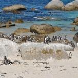 Boulder Beach - plaja pinguinilor :)
