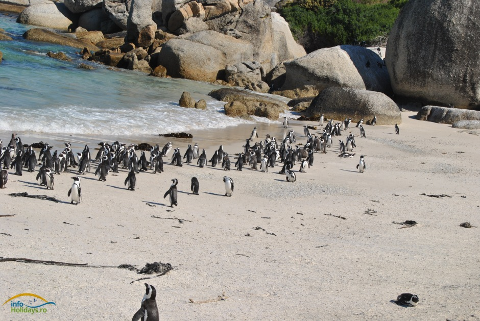 Boulder Beach - Penguin Colony