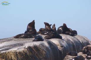Seals on the rocks!