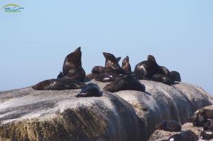 Seals on the rocks!