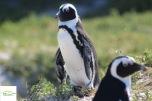 Pinguiniiiiii!!!! :)