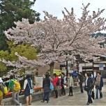Japonia - Circuit - Itsukushima