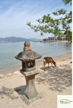 Japonia - Circuit -The Deer of Miyajima