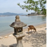 Japonia - Circuit -The Deer of Miyajima