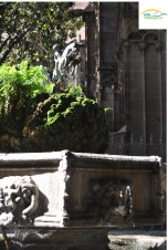 Gradina catedrala